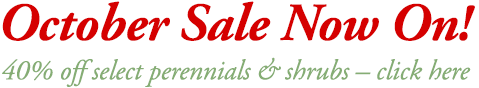 sale now