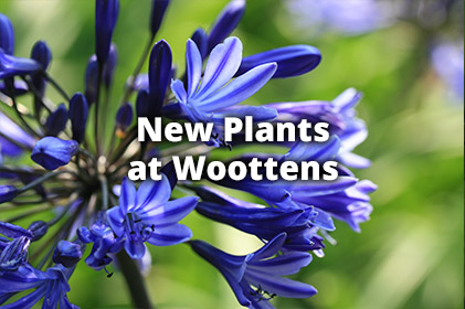 New Plants at Woottens