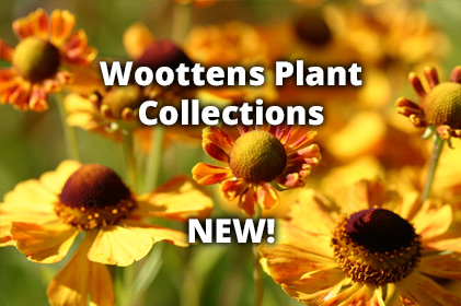 Plant Collections