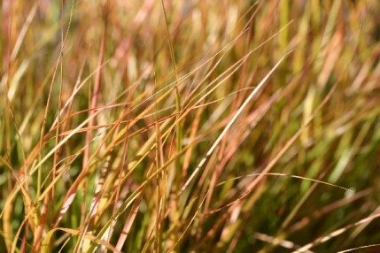 SPECIAL OFFER Best Grasses Selection