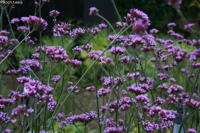 THE PLANTSMANS CHOICE Wildlife Enticing Plants photo