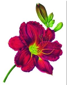 GIFT Plant Voucher £10.00 photo