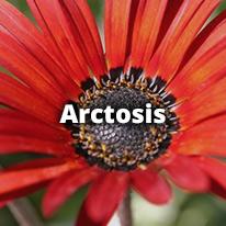 Arctosis