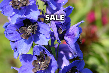Plants on Sale