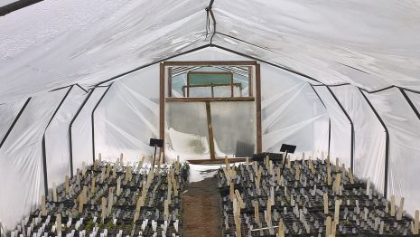 Woottens poly tunnel